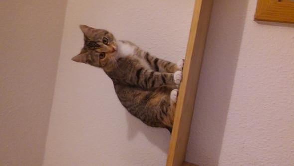 Luna - (Katze, Rasse)