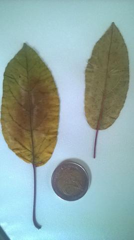 Glaube ein Baum - (Baum, Botanik, sträucher)
