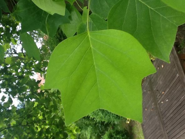 Blatt - (Garten, Pflanzen, Baum)