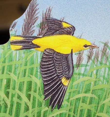 Welcher gelbschwarze Vogel ist hier zu sehen?