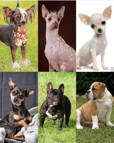 Welcher Hund gefällt dir am wenigsten?