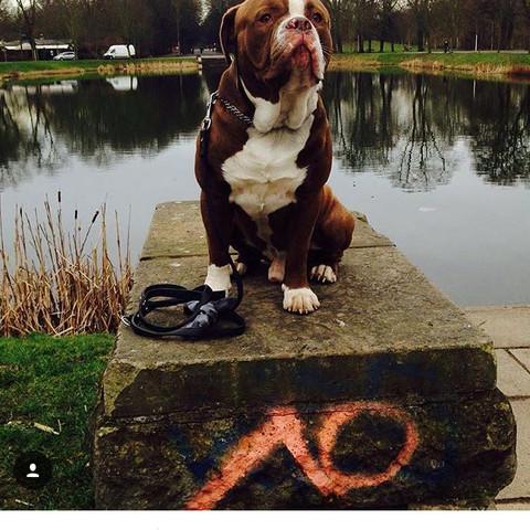 Der Hund von Davie selke - (Hund, weiss, braun)