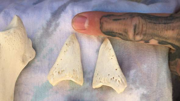 Welcher Knochen vom Hirsch ist das?