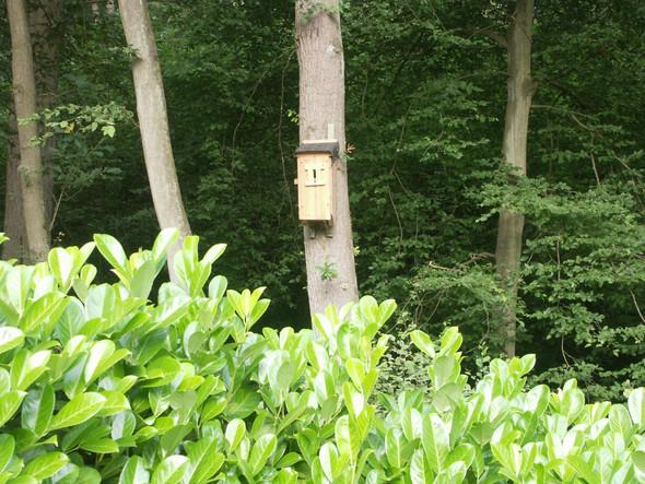 Hornissen - (Garten, Natur, Insekten)