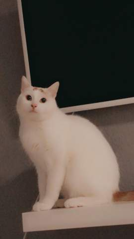 - (Tiere, Katze, Kater)
