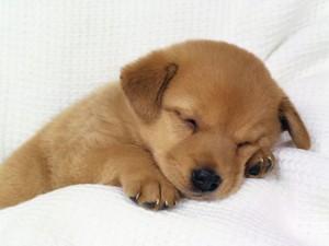 Hund - (Tiere, Hund, kaufen)