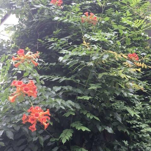 Blütenstand - (Pflanzen, Baum, sträucher)
