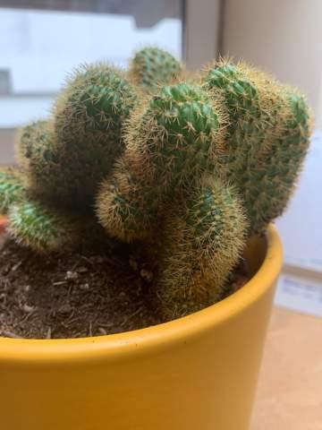 Welcher Typ von Kaktus ist das?