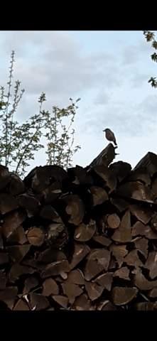 Welcher Vogel brütet hier?