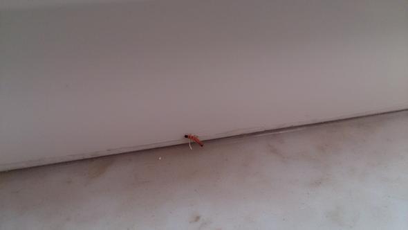 welcher wurm k fer welche larve ist es und wie bekomme. Black Bedroom Furniture Sets. Home Design Ideas