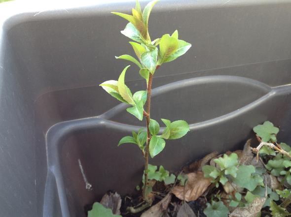 Setzling - (Garten, Pflanzen, Natur)