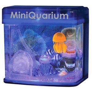 Zweites Aquarium - (Tiere, Haustiere, Fische)