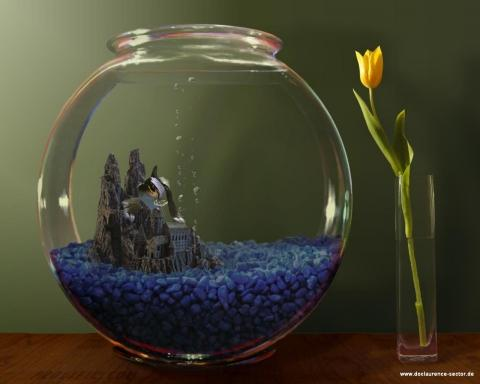 Drites Aquarium - (Tiere, Haustiere, Fische)