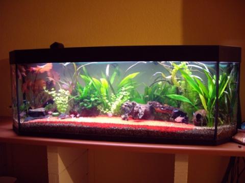 Drites aquarium for Aquarium goldfische