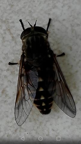 Insekt - (fliegen, Insekten)