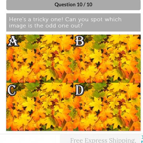welches ist anders ? - (Rätsel, Quiz, 4 Bilder)