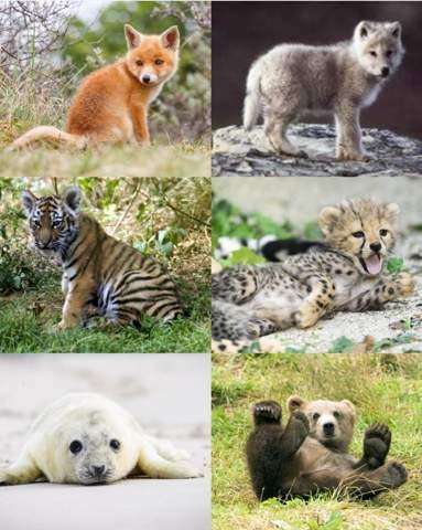 Welches dieser Tiere würdest du am liebsten haben?