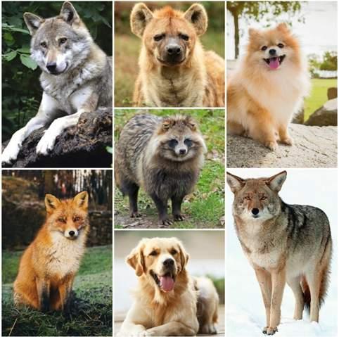 Welches dieser Tiere würdest du gern sein?