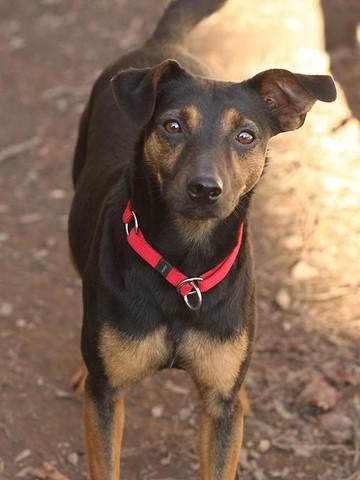 Josy - (Hund, Haustiere, Zubehör)