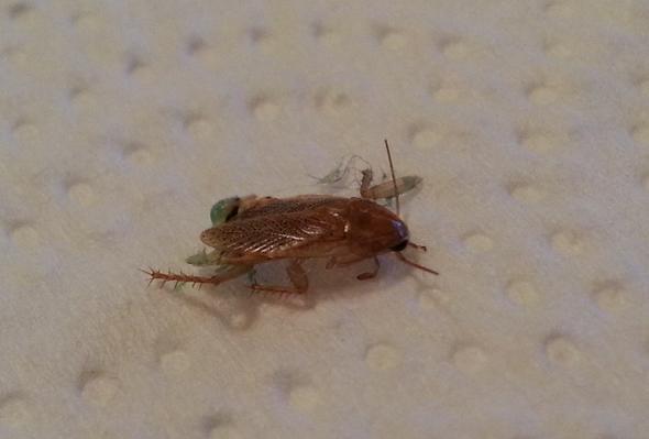 Insekt von oben - (Wohnung, Haus, Insekten)