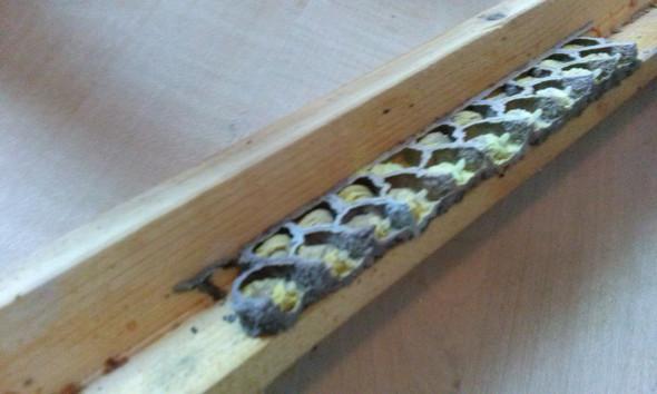Bild2 - (Tiere, Biologie, Insekten)