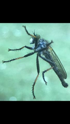 Grossansicht - (Tiere, Insekten)