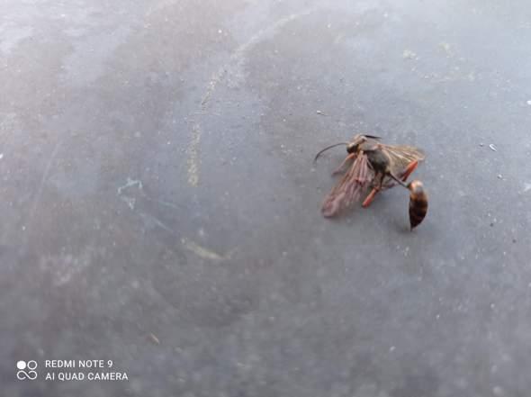 Welches Insekt haben wir hier?
