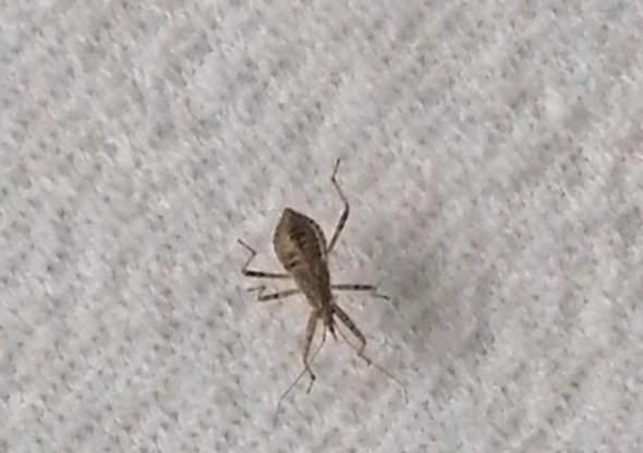 Welches Insekt ist das (Bildbestimmung)?