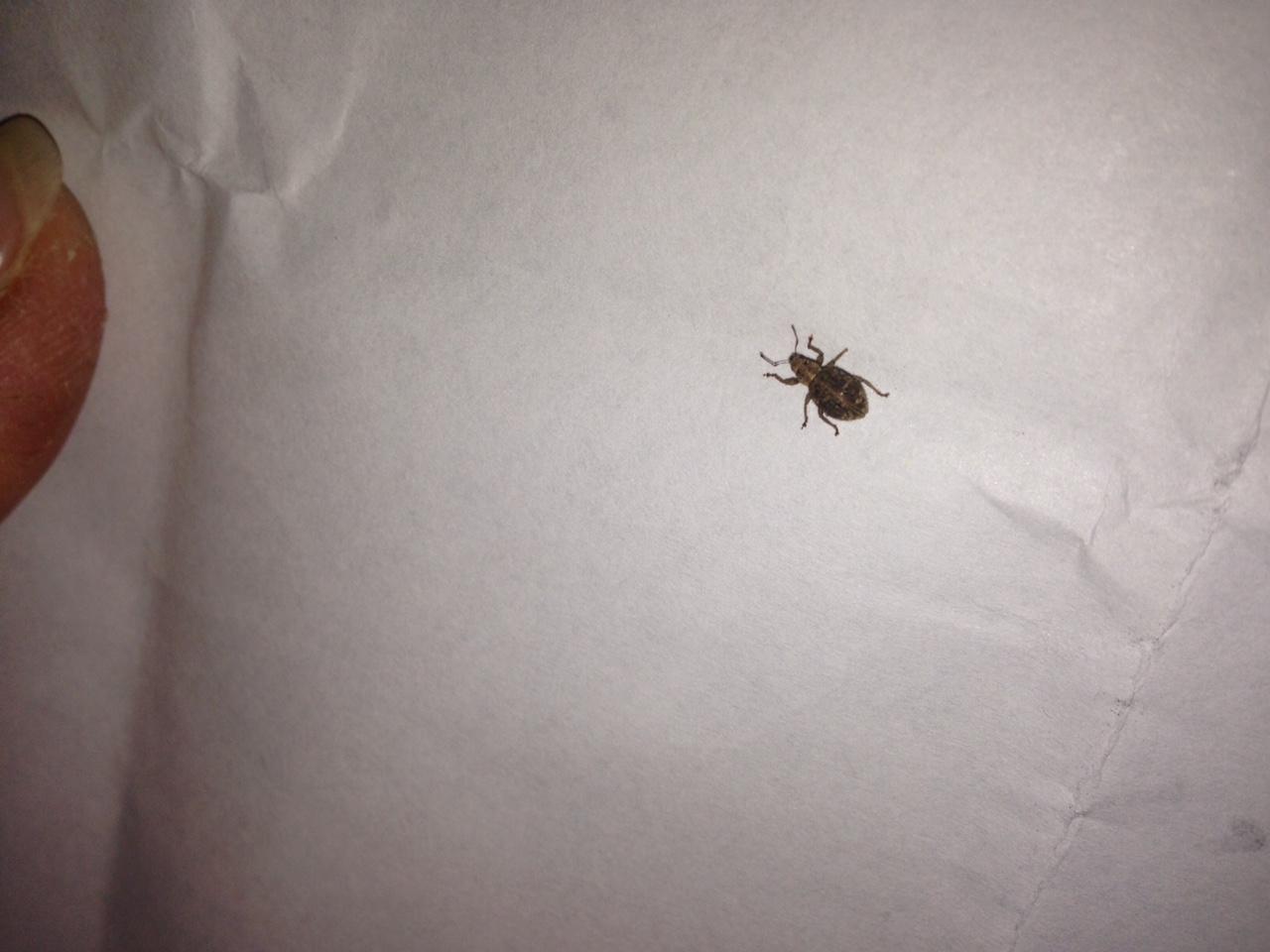 welches insekt ist im foto zu sehen deutschland insekten k fer. Black Bedroom Furniture Sets. Home Design Ideas