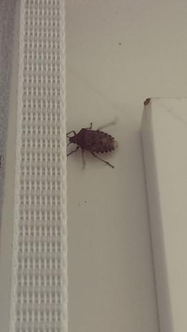 hier der Übeltäter  - (Insekten, Schädlinge)