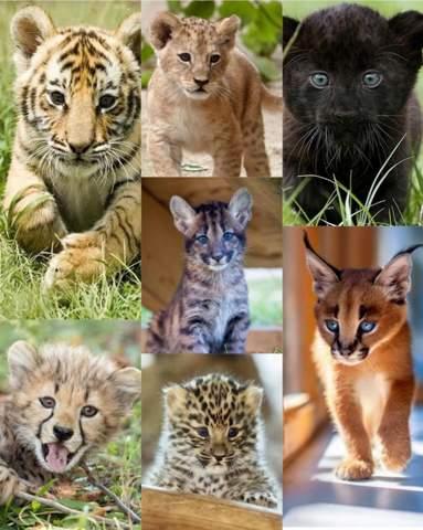 Welches Katzenbaby is das süßeste?
