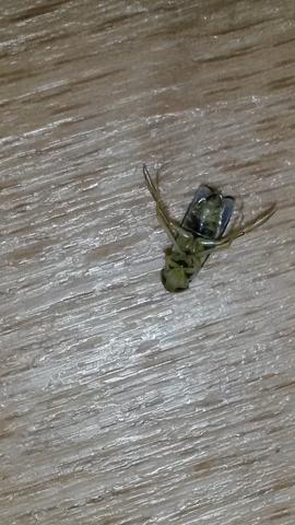 Hier ein Bild - (Insekten, Schädlinge)