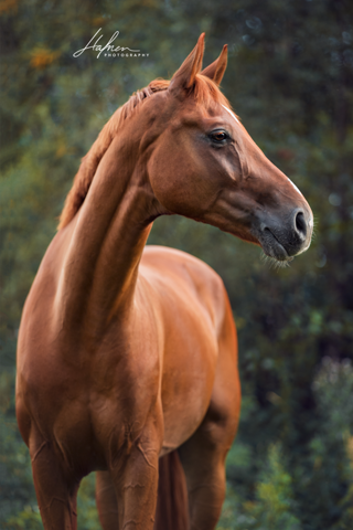 - (Pferde, Reiten, Pony)