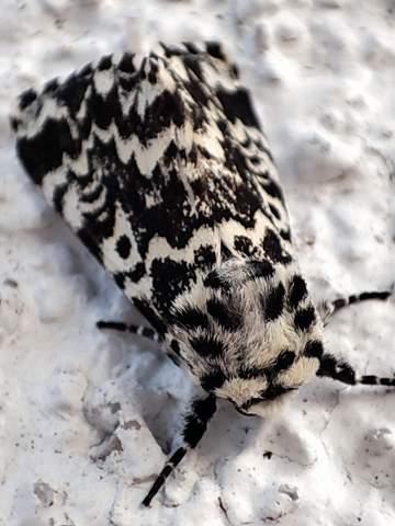Welches Tier ist das?