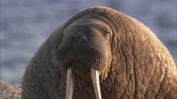 elefant - (Tiere, elefant)