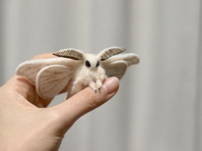 welches tier ist das kleine ding tiere insekten wei. Black Bedroom Furniture Sets. Home Design Ideas