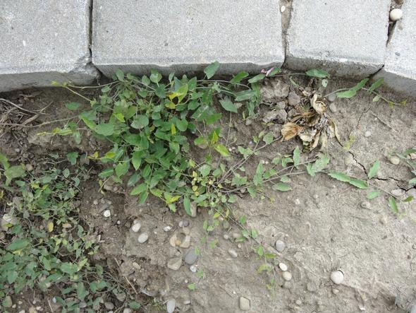 So das ist das Pflänzchen  :( - (Garten, Pflanzen)