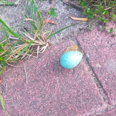 Welches Vogel Ei ist das?