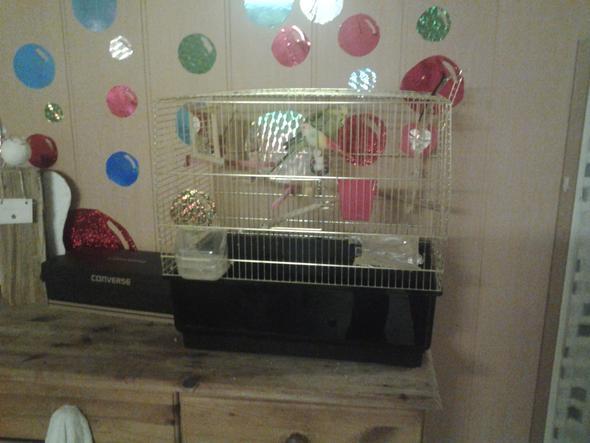 Hansi & käfig - (Tiere, Vögel, Wellensittich)