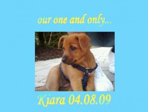Unser Baby =) - (Hund, Welpen, impfen)