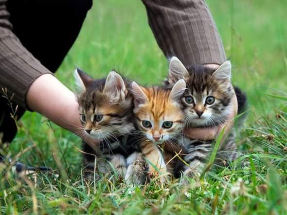 Welpen und Kätzchen für immer?