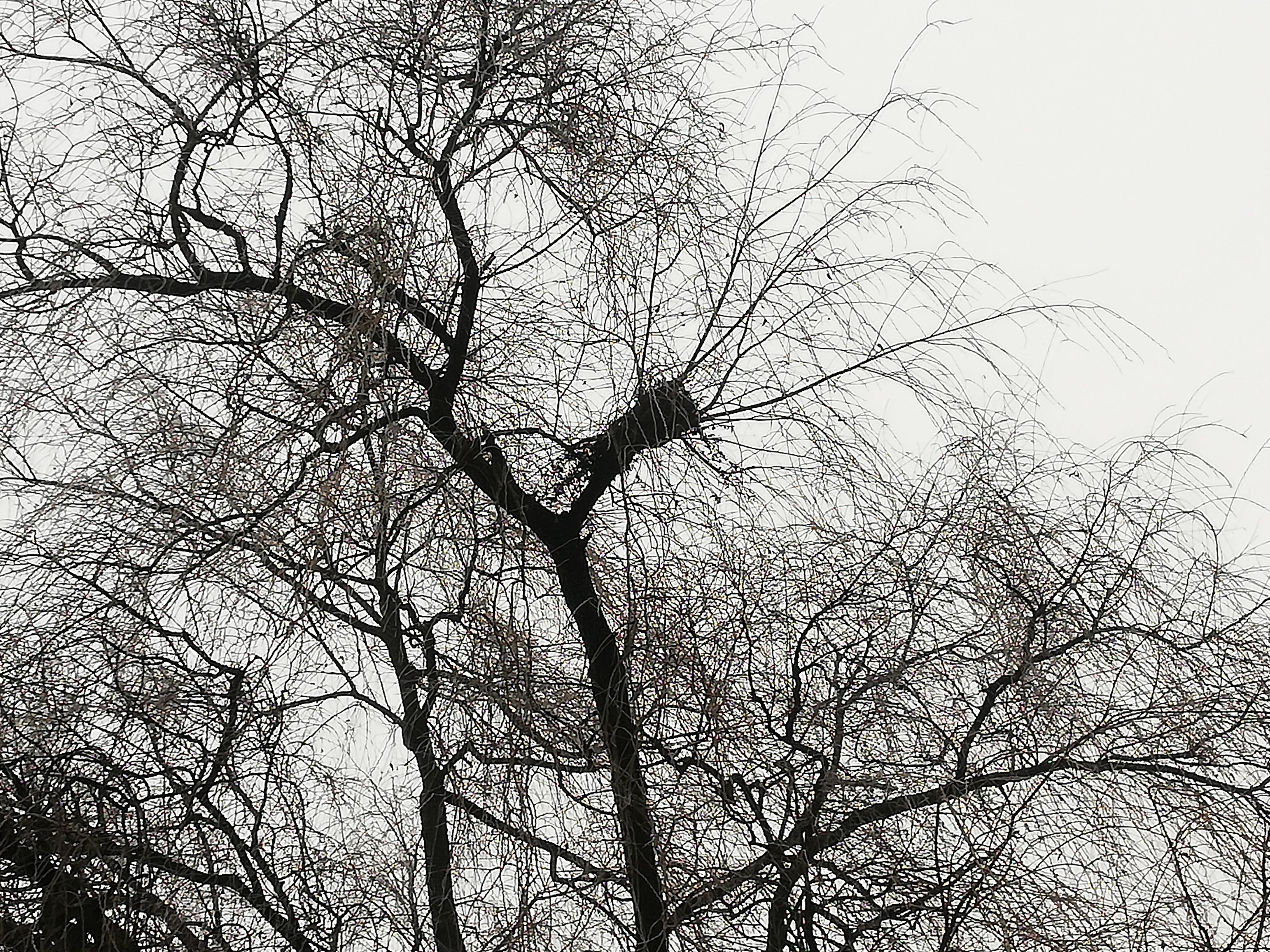 Wer Baut Garagentorantrieb Ein : wer baut so ein nest tiere v gel wald ~ Watch28wear.com Haus und Dekorationen