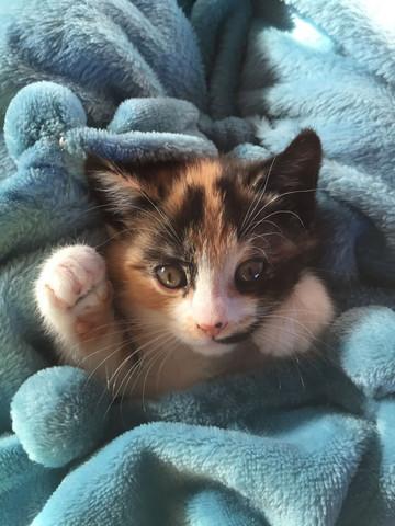 - (Liebe, Katze, süß)