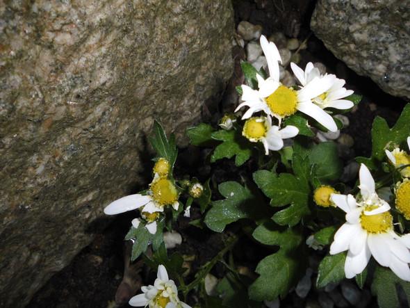 Blütenblätter-Katastrophe - (Tiere, essen, Garten)
