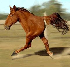 quarterhorse - (Pferde, gif, horse)