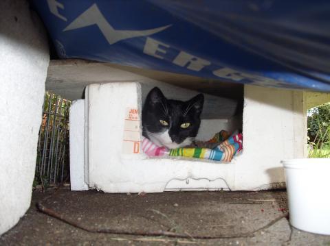 Schutz-Suche - (Katzen, schuthhuette, thermo-box)