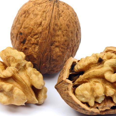 Wer hat Erfahrungen mit Walnuss- und Haselnussbaum Anbau?