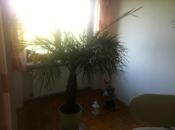Palme2 - (Pflanzen, Natur, Palme)