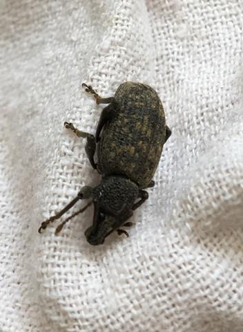 Vorderseite - (Biologie, Insekten, Kaefer)