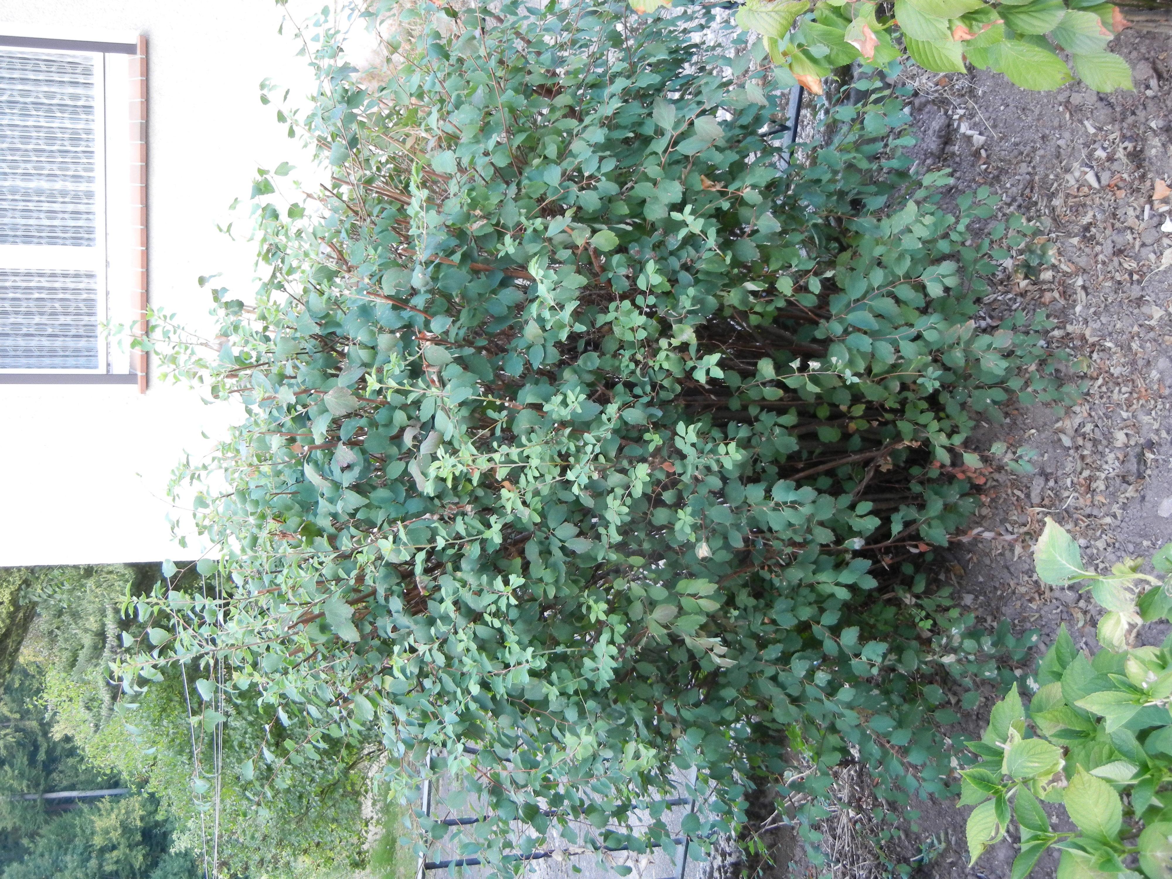wer kann bei pflanzenbestimmung helfen? (garten, pflanzen, grün)